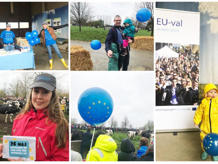 EU-tipsrunda och glada kor