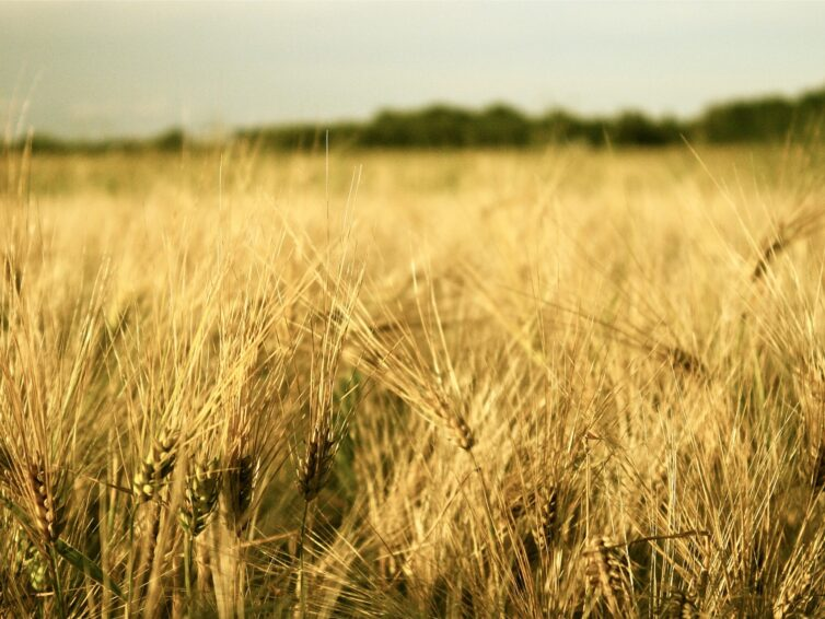 """Webinarium 9 juni """"Farm to fork – om EU:s strategi för hållbar matproduktion"""""""