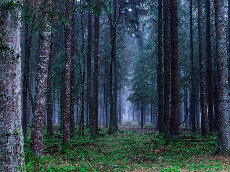 Företag inom naturturism och ekoturism kan söka utvecklingscheckar