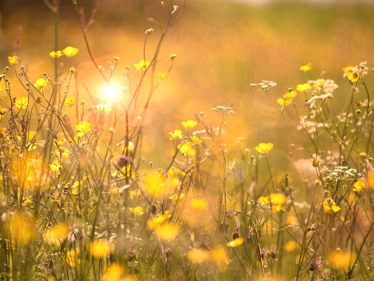 Europa Direkt Sydskåne önskar en trevlig sommar och bjuder på en tillbakablick av året som gått!